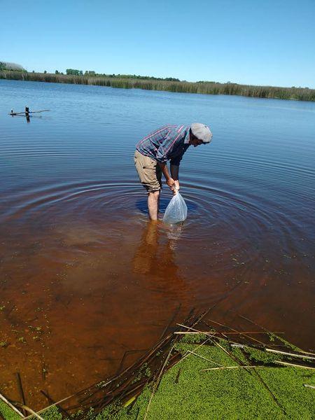 Siembran más de 100 mil alevinos en la laguna «La Rosita»