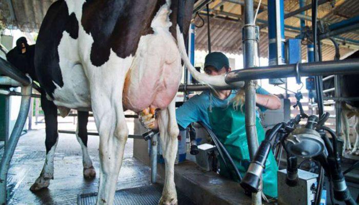 «La lechería precisa medidas urgentes para evitar la desaparición de productores»