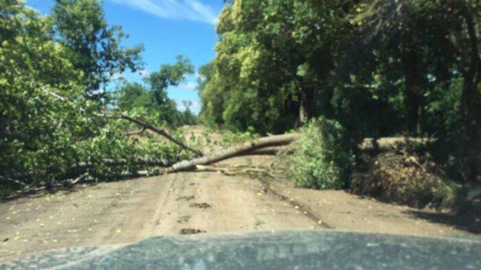 Por la caída de un árbol estuvo interrumpido el servicio eléctrico en la zona de La California