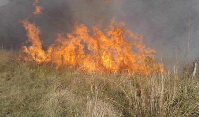 Dos incendios forestales en el inicio de 2021